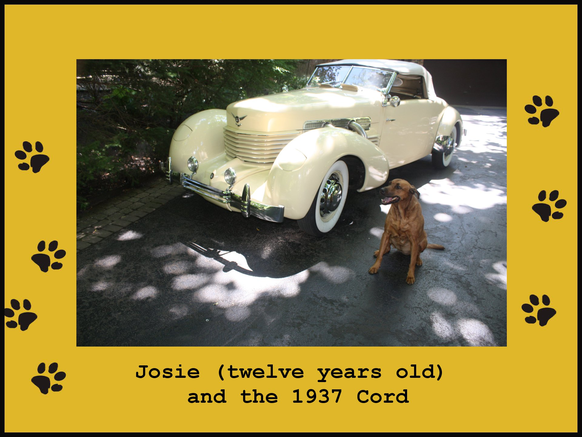 Josie and 1937 Cord (323K)